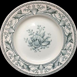 English Nantasket Clovelly Transfer Plate ~ Seaweed Seashells 1876