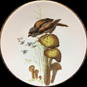 Pierre Mallet Polychrome ORNITHOLOGY Porcelain Plate ~ 1870