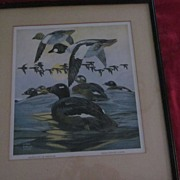 Golden Eye  White Winged Scoter Waterfowl Litho, Lynn Bogue Hunt
