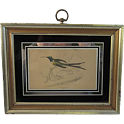 Hand Colored Engraved Framed Bird Print.
