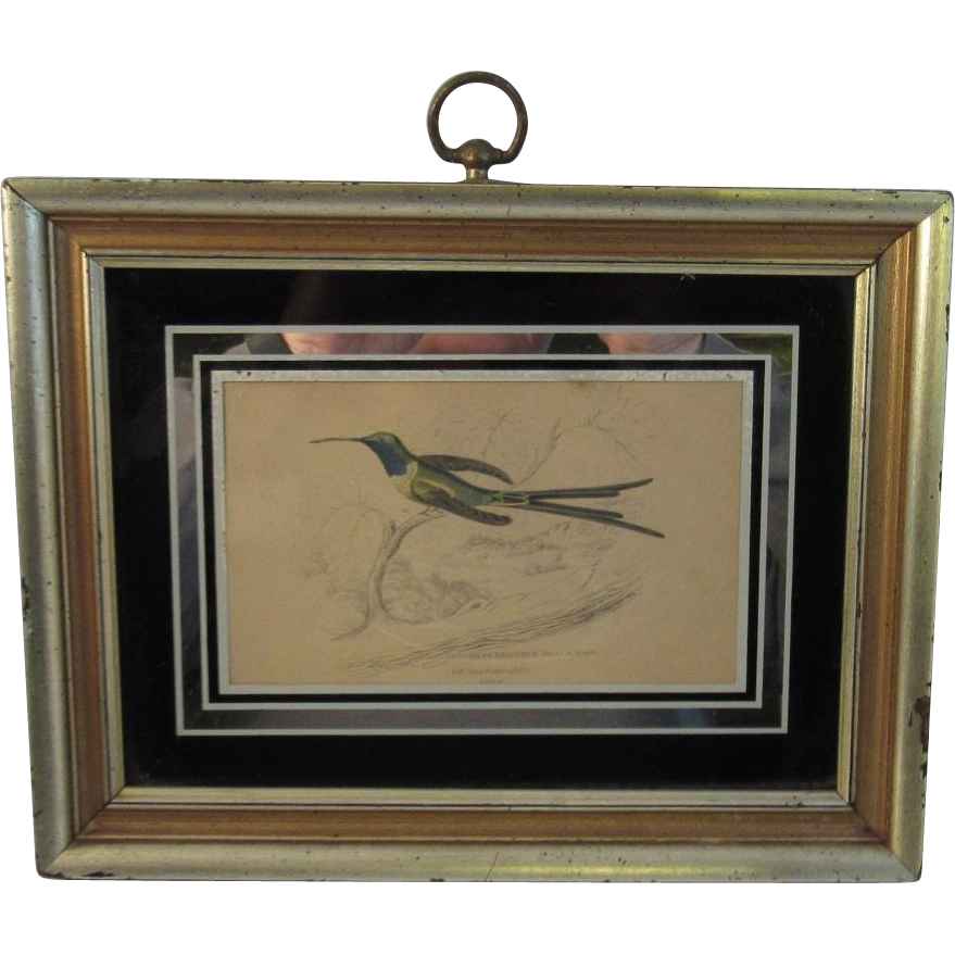 Hand Colored Engraved Framed Bird Print