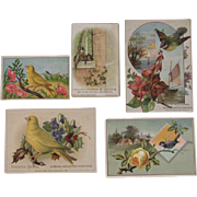 5 Bird Advertising Trade Cards