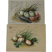 2 Easter Calling Cards with Eggs of Bullfinch and Blue Tit Birds