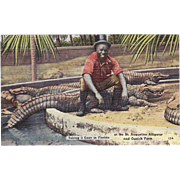 Black Americana Postcard St. Augustine Alligator and Ostrich Farm Taking it Easy in Florida
