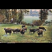 Raphael Tuck & Sons Cows Postcard Pleasant Pastures Birthday Greetings PhotoChrome German Saxony Series 4447