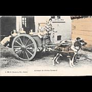 Dog Drawn Milk Cart Postcard Belgium Attelage De Chiens Flamand Belgian
