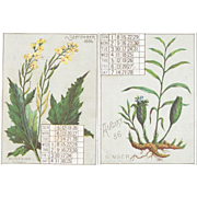 1886 Calendar Spice Trade Cards from Bugbee & Brownell Ginger and Mustard Victorian Advertising August September