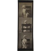 Dog Photos Sudio Strip Photographs Black and White Photo Booth
