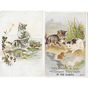 2 Kitty Cat and Frog Victorian Trade Cards