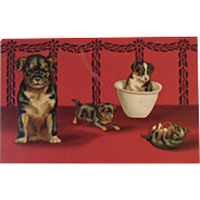 German Frolicking Dogs Postcard Puppy Puppies