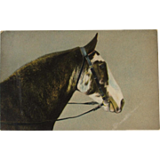 1905 German Horse Postcard from the Theochrom Series 1040