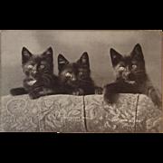 c1900 Coontown Babies Black Cats Postcard by Bullard Perfect for Halloween Kitty Kitties Sheahan Cat Postals