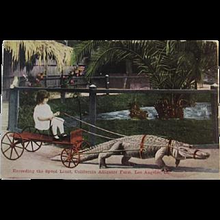 Exceeding the Speed Limit, California Alligator Farm, Los Angeles California Postcard