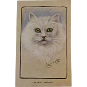 Artist Signed Chinchilla Cat Postcard