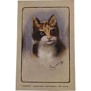 Artist Signed Short-Hair Tortoishell and White Cat Postcard