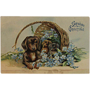 1912 German Puppy Dogs in a Basket Birthday Greeting Embossed Postcard