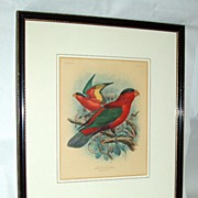 St.George Mivart 1896 Hand-Colored Parrot Lithograph Purple Bellied Lory sgnd by Keulemans