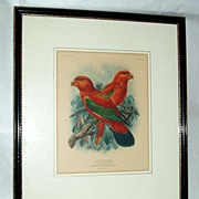 St.George Mivart 1896 Hand-Colored Parrot Lithograph Chattering Lory sgnd by Keulemans