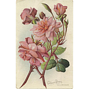 """1911 """"California Roses""""  Artist signed Cecil Brunner vintage Postcard"""