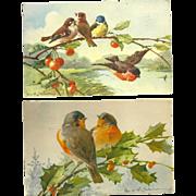 Set of 2 Beautiful Artist Signed Catherine Klein vintage Postcards featuring Bird
