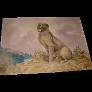 Vintage Alexander Pope Jr. Chromolithograph Art Print of Dog Signed