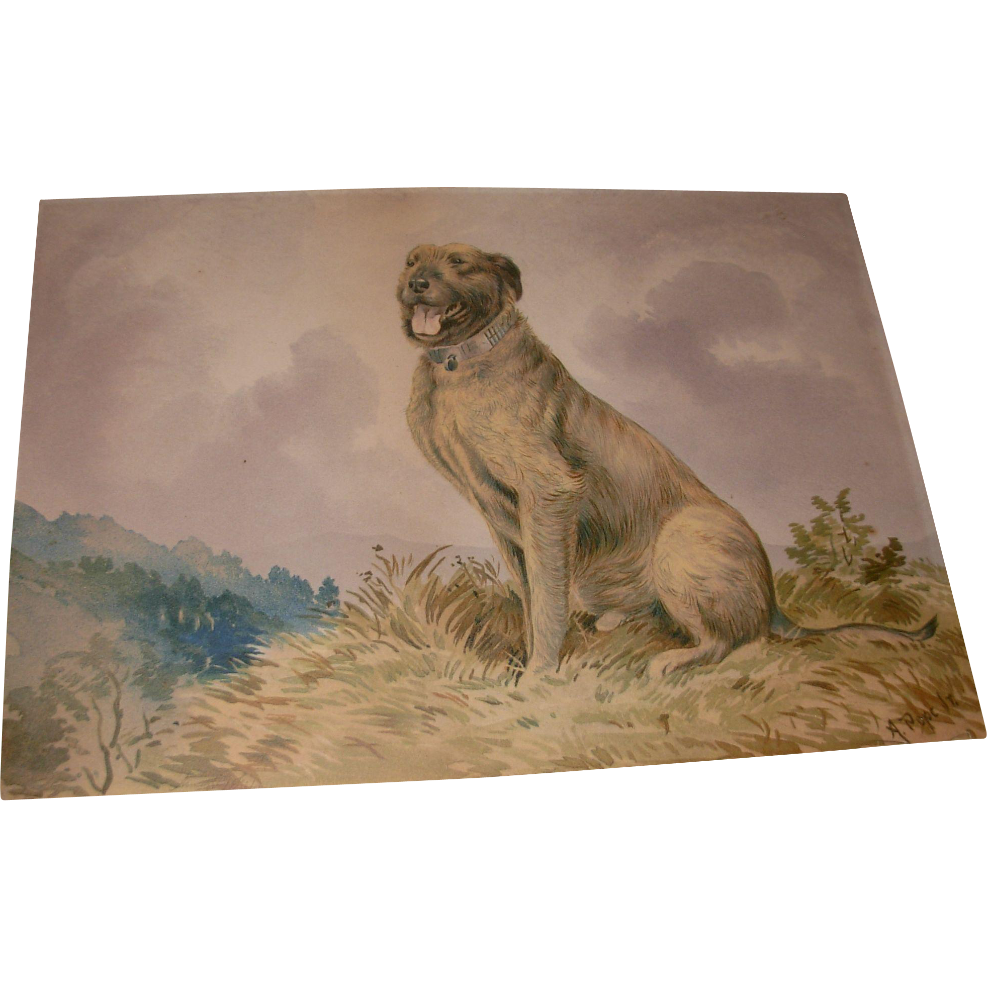Vintage Alexander Pope Jr. Chromolithograph Art Print of Dog Signed