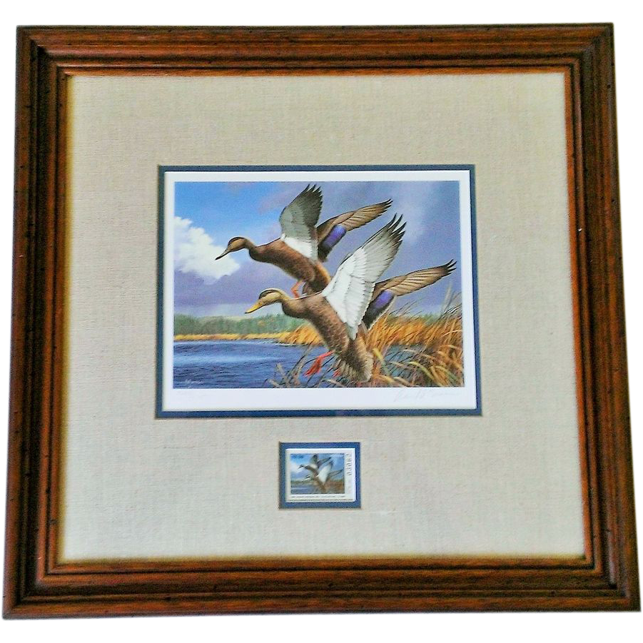 David A. Maass 1984 First of State Maine Migratory Waterfowl Signed & Framed Print & Stamp