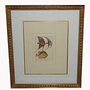 Antique Fish Print In Gilt Designer Frame