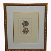 Antique Tropical Fish Print In Gilt Designer Frame