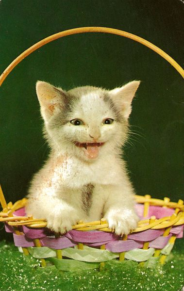 Happy Kitten in a Basket Postcard