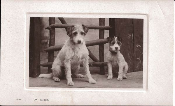 "Real Photo Postcard of Two Dogs Entitled ""On Guard"""