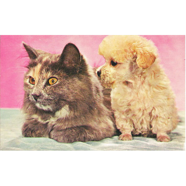 Postcard Adorable Cat and Puppy Best Friends