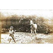 Real Photo Postcard Boy Pulling Horse