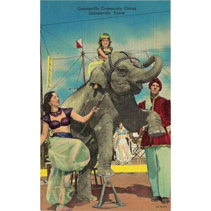 Circus Postcard Elephant and Performers / Gainesville Community Circus / Gainesville Texas