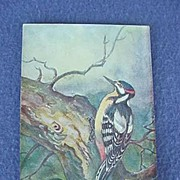 Vintage Woodpecker Postcard from Europe
