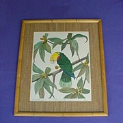 Vintage Yellow-headed Amazon Print Limited Edition