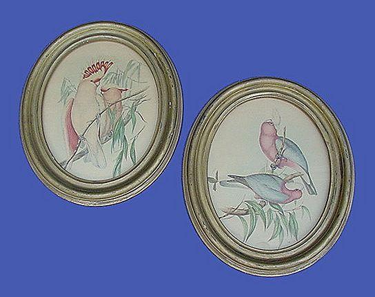 Vintage Gould Cockatoo Prints Oval Frames