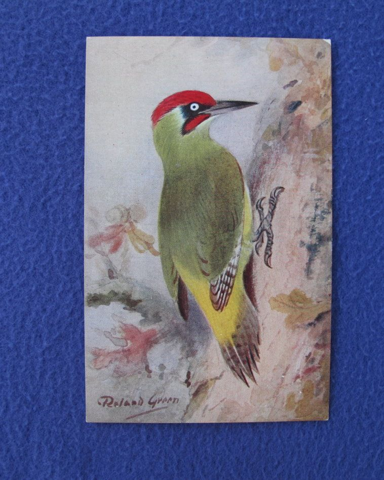 Vintage Roland Green Woodpecker Postcard