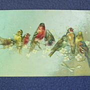 Early 1900's Finch and Sparrow Postcard from England