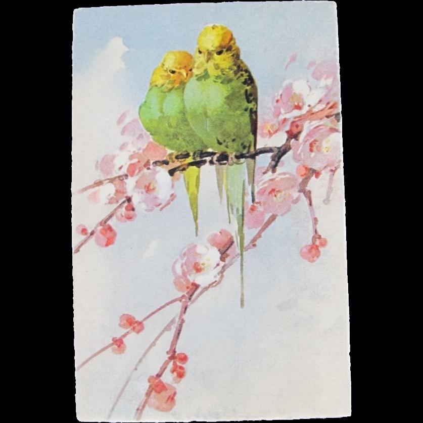 Catherine Klein Germany Budgie Parakeet Postcard