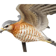Royal Worcester Bronze Porcelain Sharp-Shinned Hawk