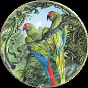Wedgwood Fragile Paradise Military Macaw Plate