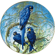Wedgwood Hyacinth Macaw Plate from England