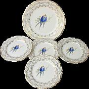 Atlas China Parakeet Budgie Cake Set