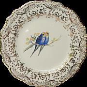 Vintage Atlas China Parakeet Budgie Plate