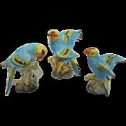 Vintage Miniature Bone China Parakeet Budgie Set