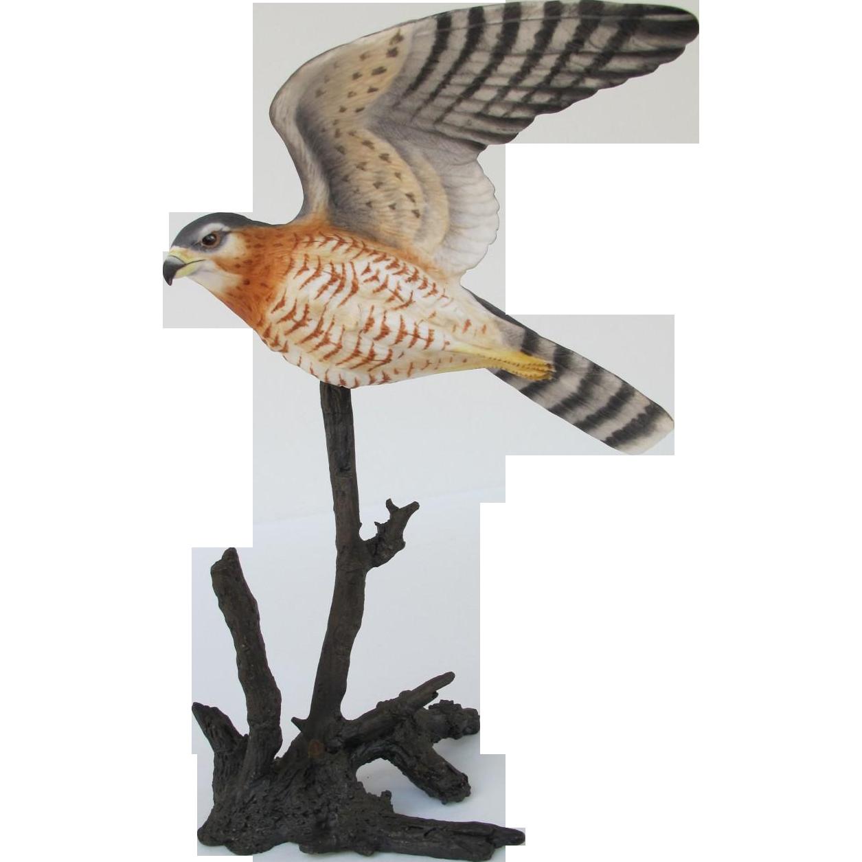 Royal Worcester Sharp-shinned Hawk Figurine