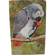 Vintage African Grey Postcard from Germany