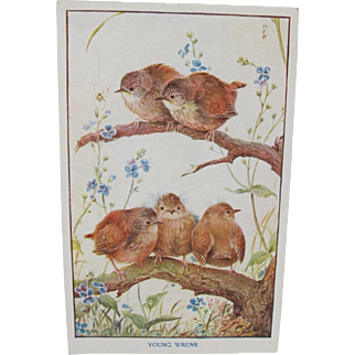 Vintage Young Baby Wrens Postcard from England