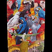 Birds of the Tropics Parrot Cockatoo Postcard from England